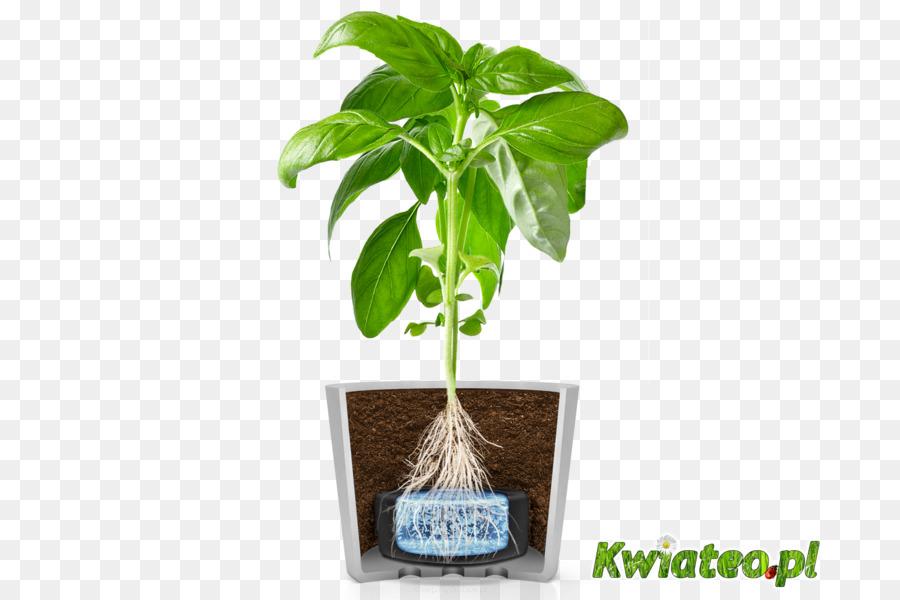 Basil Flowerpot Herbalism Kitchen Garden Tree Hydroponic Grow