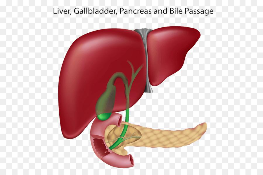 Liver And Gallbladder Pancreas Bile Duct Liver Human Png Download