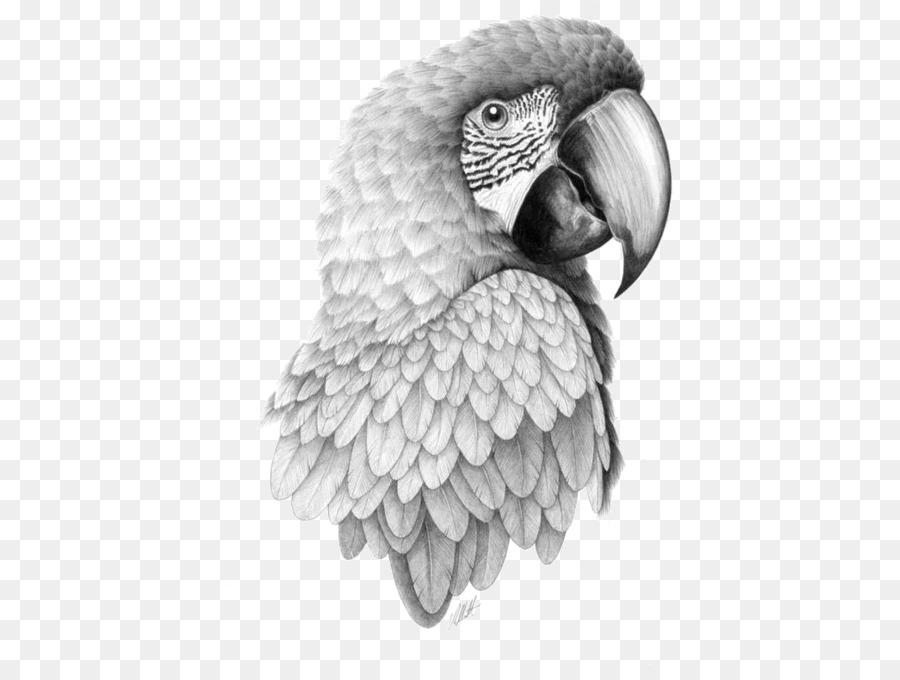 Черно белые картинки попугаев