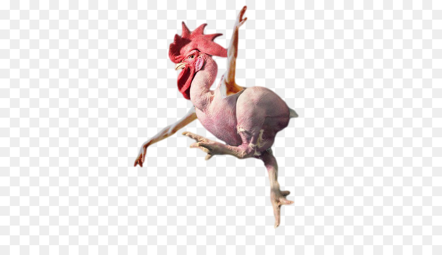 Rooster Chicken As Food Broiler Cockfight Chicken Little Png