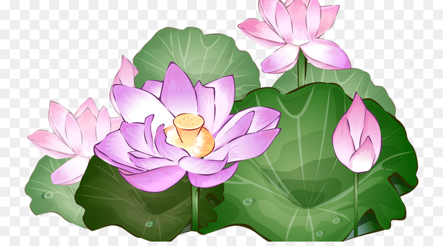 Sacred Lotus Clip Art Portable Network Graphics Flower Image Glass