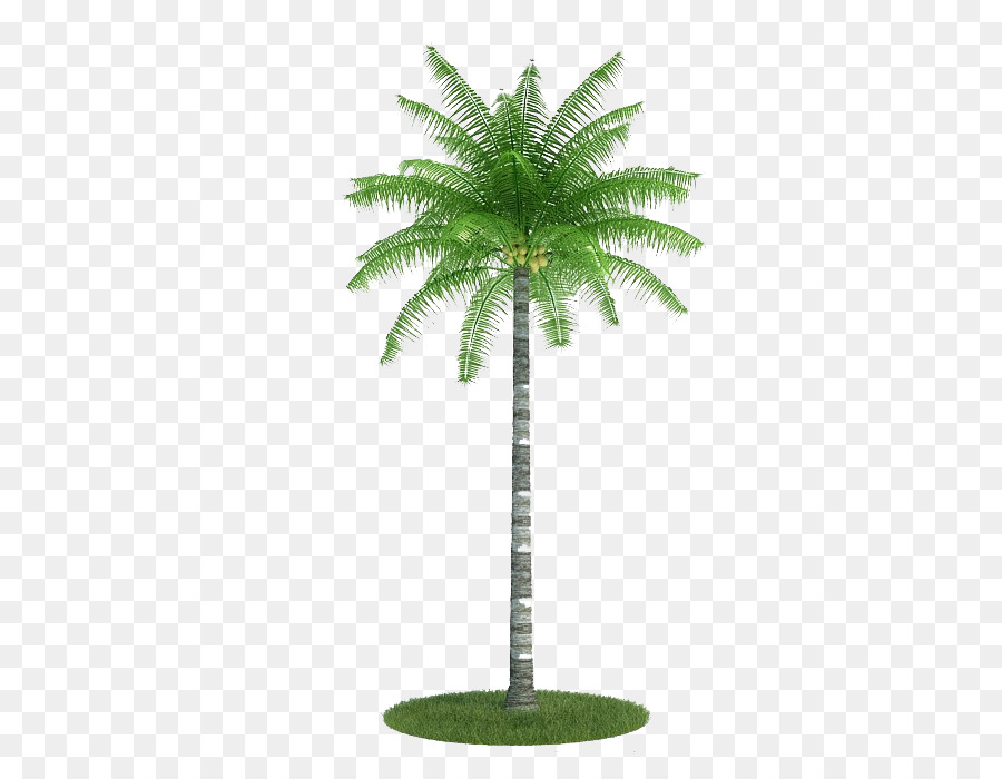 Coconut Tree Cartoon png download - 700*700 - Free Transparent Palm