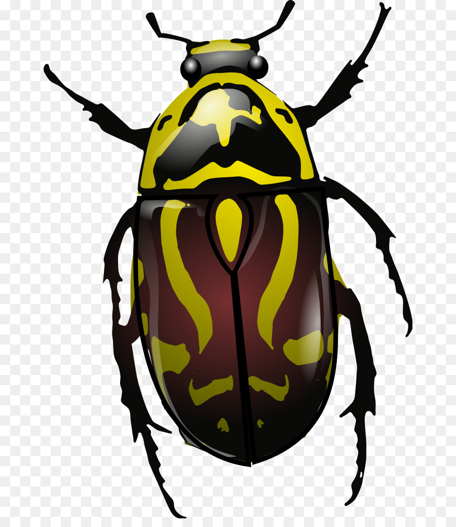 Polyphaga Wiring diagram Eupoecila australasiae Clip art - wisconsin beetles