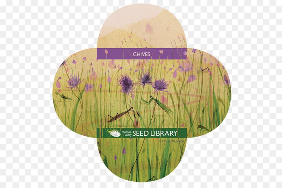 Vegetable Garden Pests Identification png download - 800*600