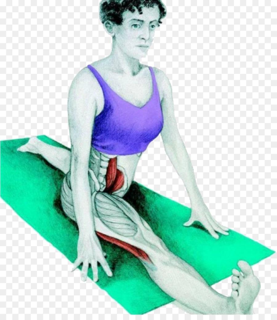 Stretching Muscle Split Hamstring Exercise - hamstring