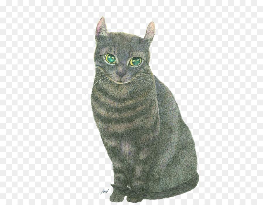 American Shorthair Cat Drawing