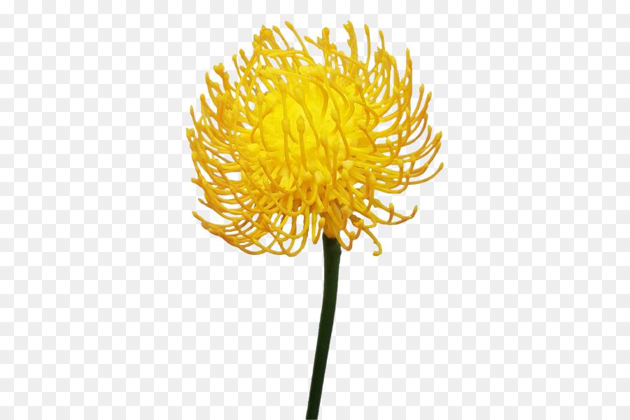 Common dandelion pollen chrysanthemum plant stem names of orange common dandelion pollen chrysanthemum plant stem names of orange flowers succulents mightylinksfo