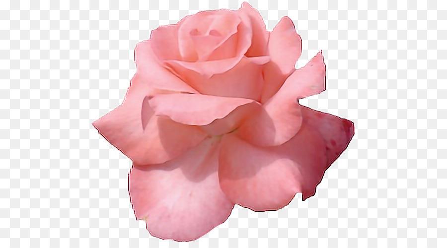 Pink flowers rose clip art image gold floral backgrounds tumblr pink flowers rose clip art image gold floral backgrounds tumblr mightylinksfo