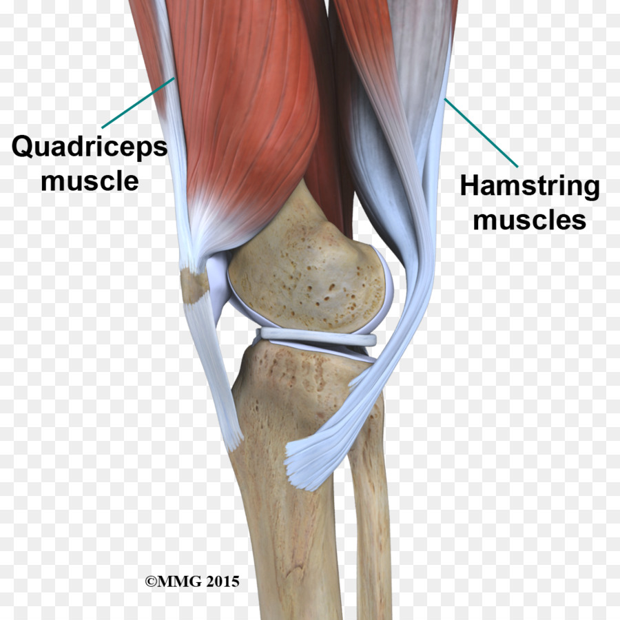 Knee Anatomy Hip Joint Shoulder Knee Png Download 10801080