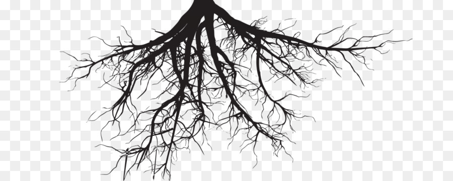 Clip Art Root Portable Network Graphics Tree Trunk Roots 2016 Png 1200 480 Free Transpa