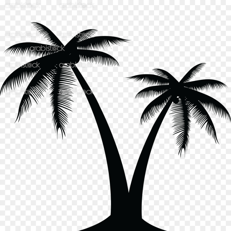 Coconut Vector Graphics Clip Art Portable Network Graphics Palm