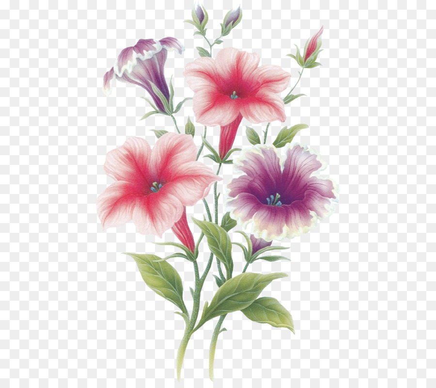 Flower August 22 Portable Network Graphics Painting Adobe Photoshop