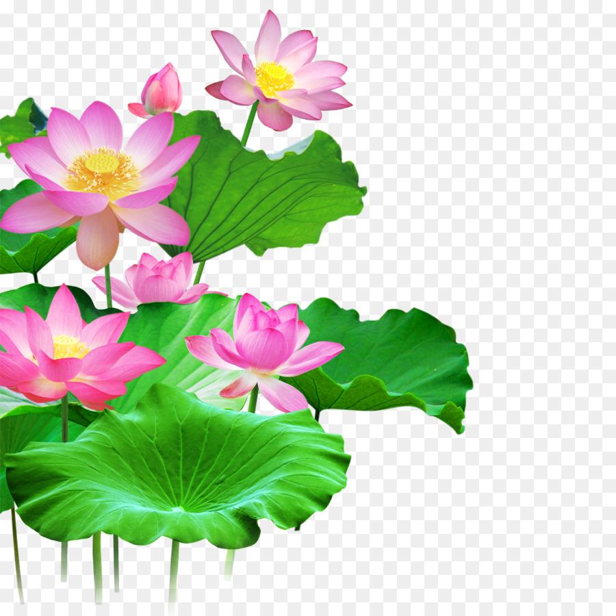 Sacred Lotus Portable Network Graphics Clip Art Image Vector