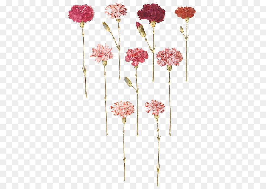 Oeillet Fleur Floral Design Gottorfer Codex Tatouage Fuso