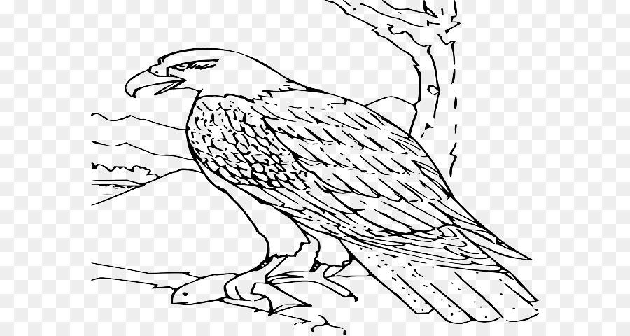 Águila calva libro para Colorear Dibujo de la Imagen - la vida ...