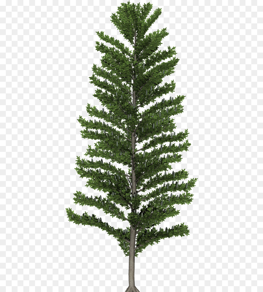 Christmas Trees Png.Spruce Fir Christmas Tree Pine Larch Of Trees Png Download