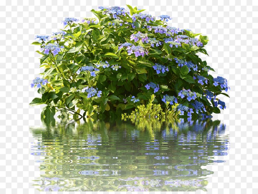 Außergewöhnlich Tee des Himmels Strauch Garten French hydrangea Duschvorhänge @YT_74