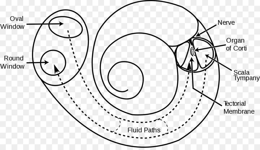 Ear Diagram Psychology