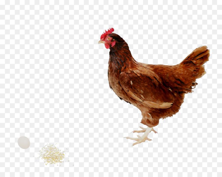 Rooster Chicken As Food Kifaranga Meat Png Download 41733271