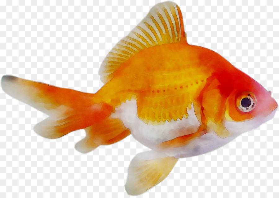 Ajman Fish Market Fish png download - 1458*1030 - Free