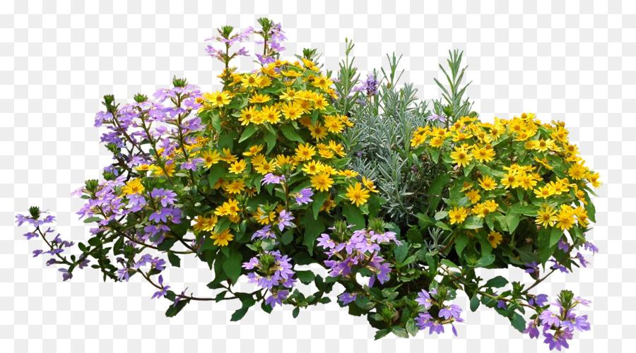 Shrub Flower png download - 2391*1323 - Free Transparent Shrub png