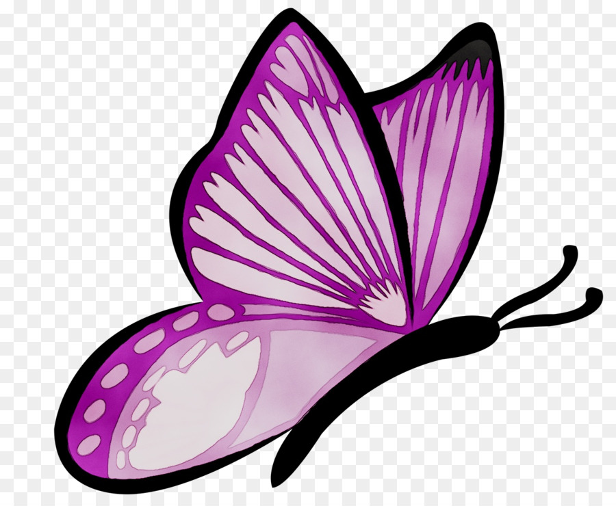 Leaf Background png download - 1200*980 - Free Transparent