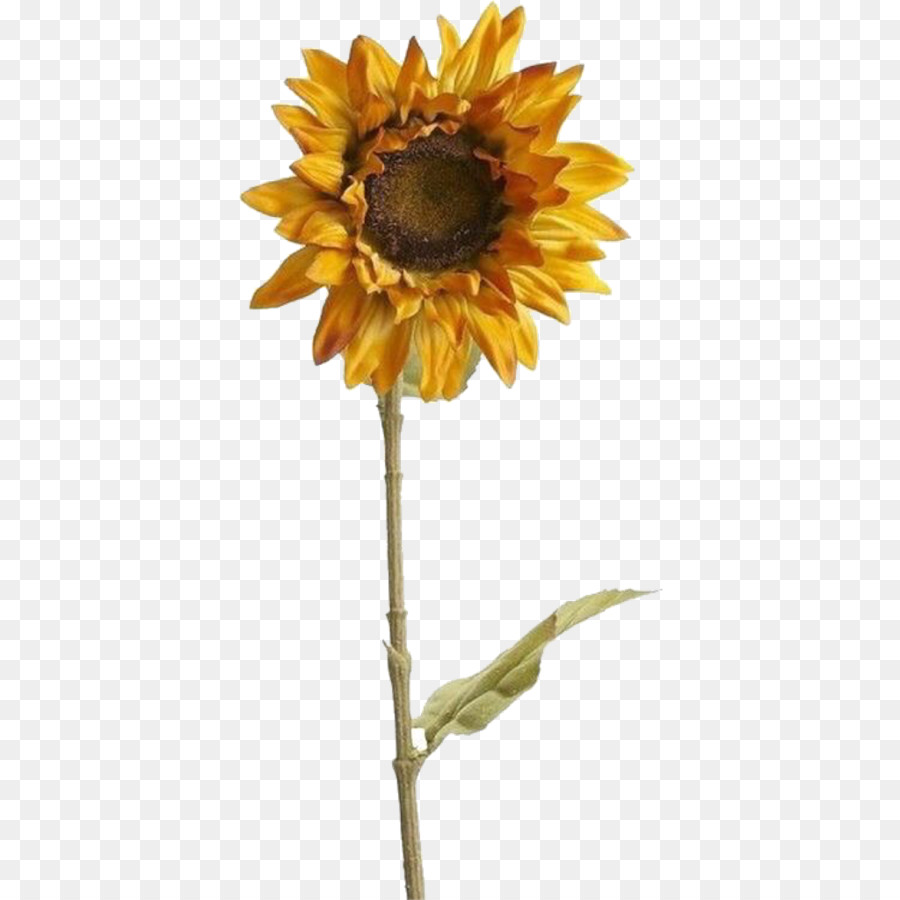Sunflower aesthetic. Flowers clipart background png