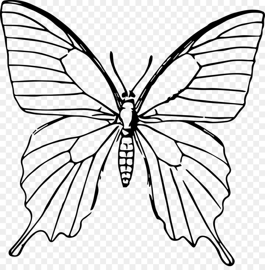 Butterfly drawing line art moths and butterflies png