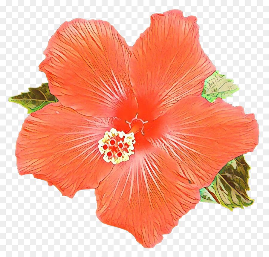 Hibiscus Tea Shoeblackplant Blue Hibiscus Flowering Tea Png
