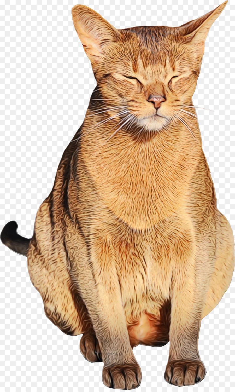 Bengal Cat Abyssinian Cat Tabby Cat British Shorthair Havana Brown