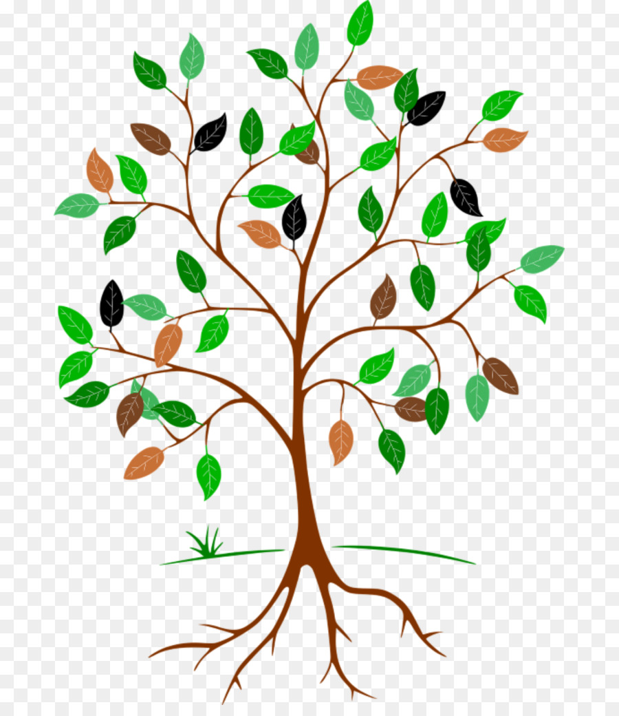 Clip Art Root Leaf Tree Portable Network Graphics Family Tree Png