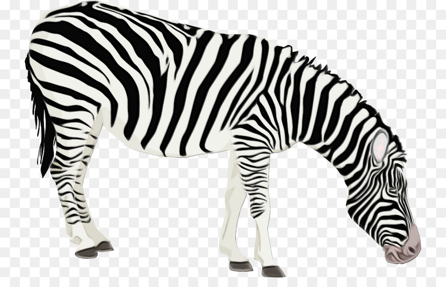 Zebra Coloring book Drawing Animal Child - png download ...