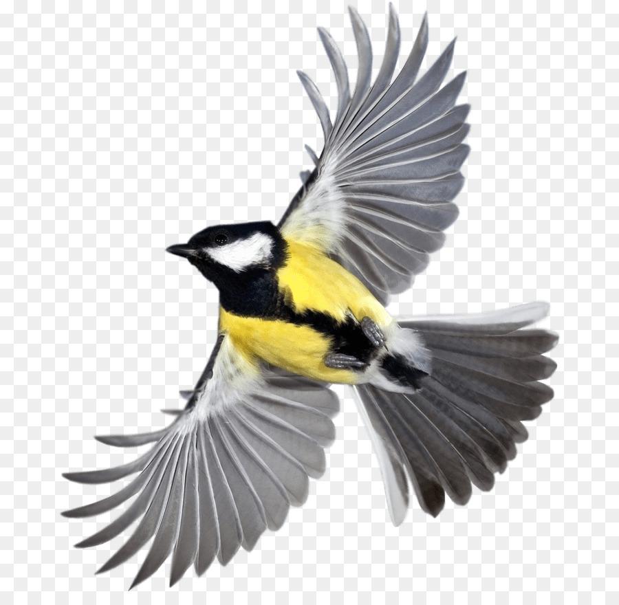 Bird Bird png download - 731*861 - Free Transparent Bird png Download
