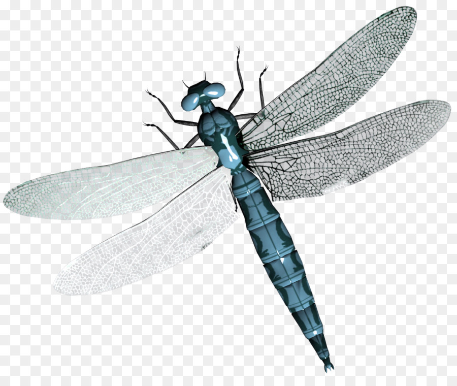 Dragonfly Wings Png Png Download 952 787 Free