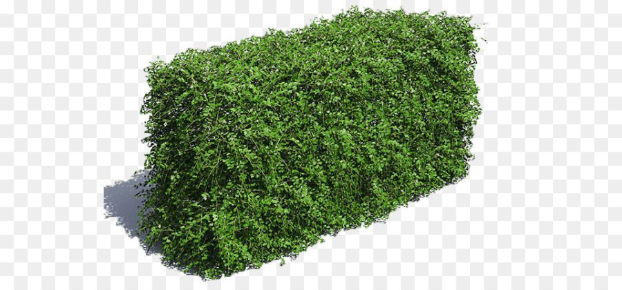 Green Grass Background png download - 600*417 - Free